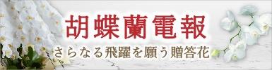 胡蝶蘭電報