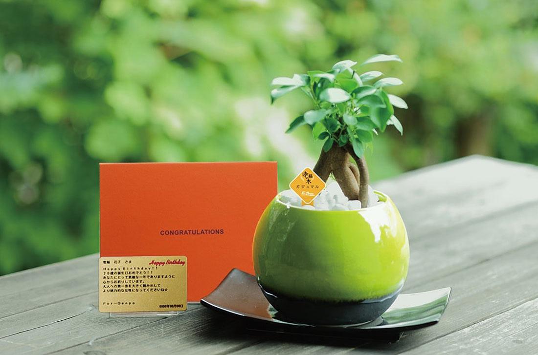 観葉植物「ガジュマルグリーン メッセージ」