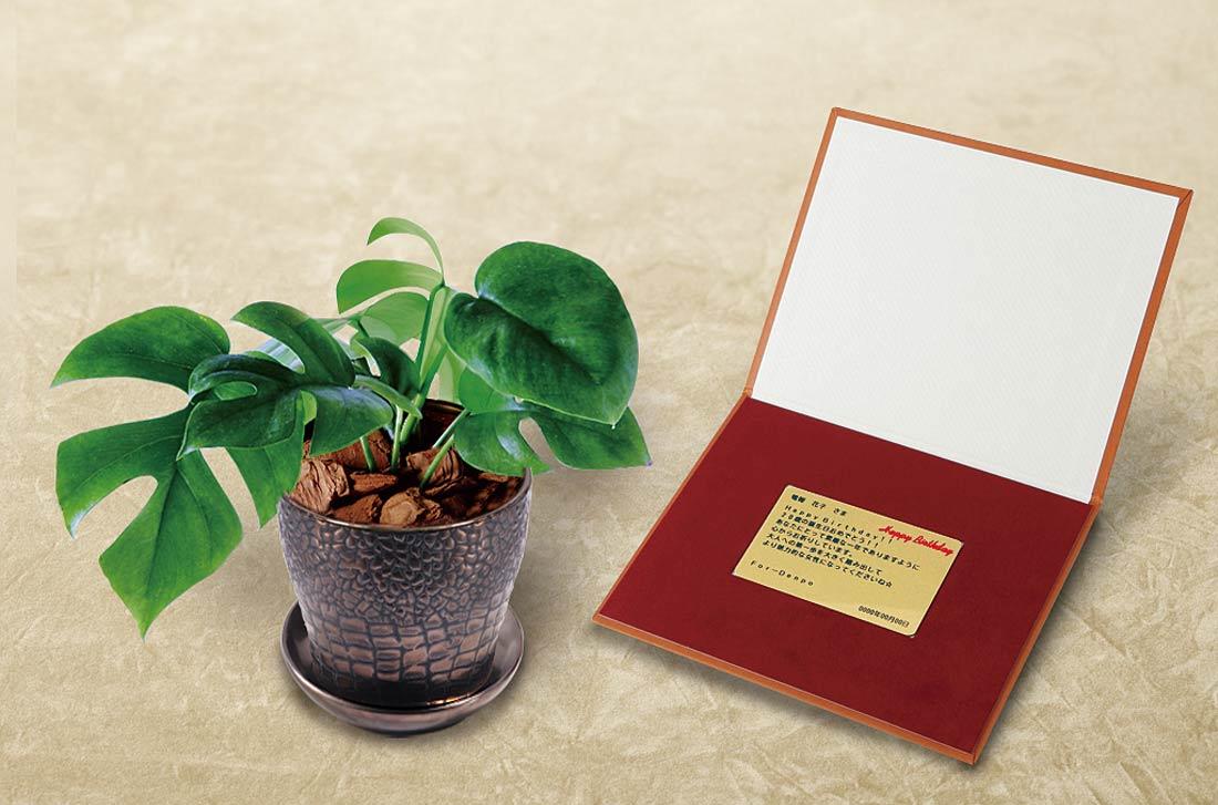 インテリアとして人気の高い観葉植物の電報「ヒメモンステラ メッセージ」