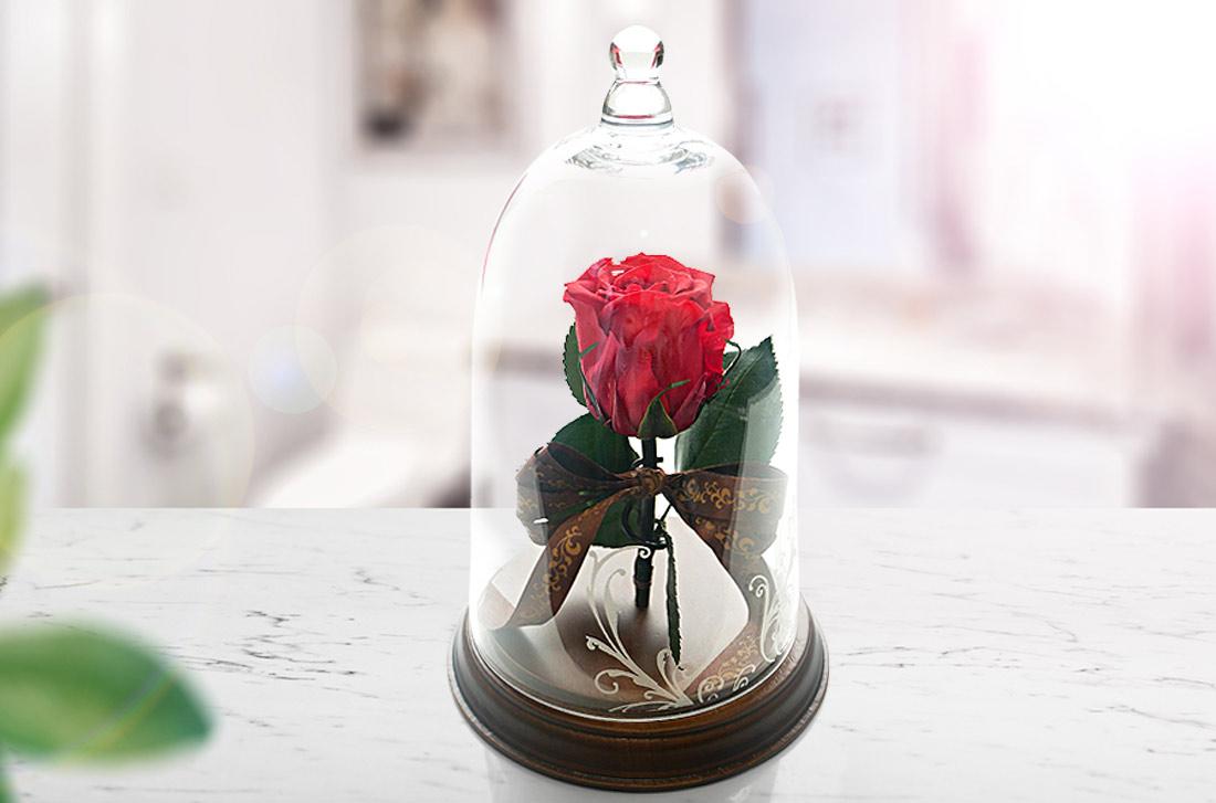 大きなバラ一輪で伝えるお祝い電報「プリザーブド レガロ」